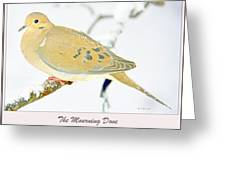 Mourning Dove In Snow Animal Portrait Greeting Card