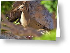 Mourning Dove On The Hillside Greeting Card