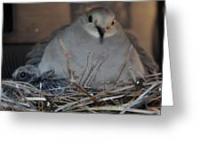 Mourning Dove With One Of Two Chicks Greeting Card