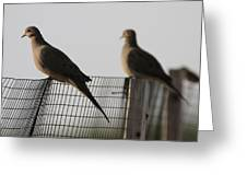 Mourning Doves Calverton New York Greeting Card