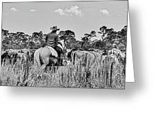 Moving Cattle Greeting Card