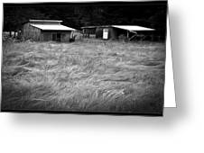 Moving Grass Greeting Card by Dale Stillman