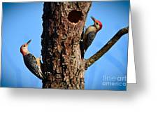 Red Bellied Woodpeckers Greeting Card