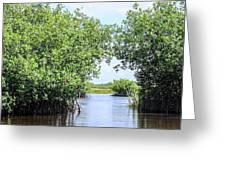 Moving The Glades Of Roatan Greeting Card