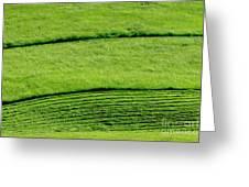 Mowing Hay  Greeting Card by Thomas R Fletcher