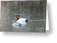 Mr And Mrs Canvasback Greeting Card