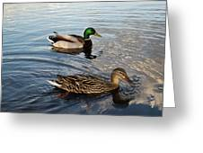 Mr And Mrs Duck On Parade Greeting Card