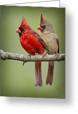 Mr. And Mrs. Northern Cardinal Greeting Card by Bonnie Barry