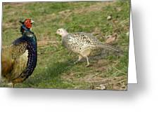 Mr And Mrs Pheasant Greeting Card