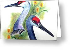 Mr And Mrs Sandhill Cranes Greeting Card