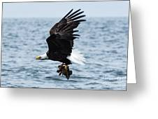 Mr. Bald Eagles Catch Greeting Card