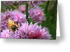 Mr Bee On My Chives Greeting Card