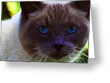 Mr. Blue Eyes Greeting Card