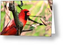 Mr Cardinal Greeting Card