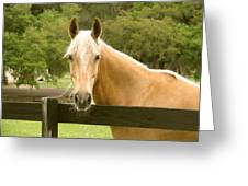 Mr. Ed Greeting Card