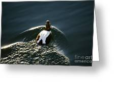 Mr. Eider Greeting Card