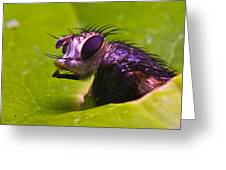 Mr. Fly Greeting Card