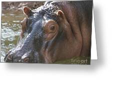 Mr. Hippo Greeting Card