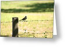 Mr. Mockingbird Greeting Card