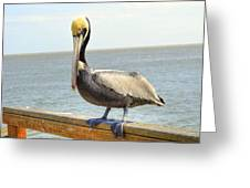 Mr. Pelican Greeting Card