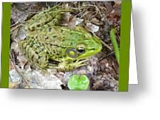 Mr. Perfectfrog Greeting Card