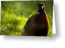 Mr Pheasant Greeting Card
