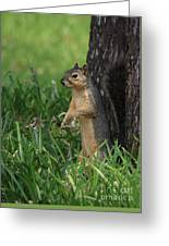 Mr. Squirrel Greeting Card