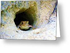 Mr. Toads Sand Castle Greeting Card