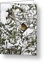 Mrs Cardinal In The Jasmine Greeting Card