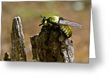 Mrs. Fly Greeting Card