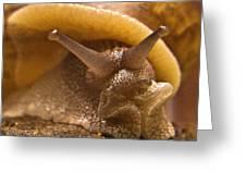 Mrs. Snail Greeting Card