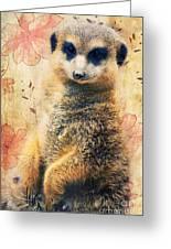 Mrs Suricate Greeting Card