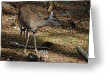 Ms Doe Greeting Card