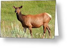 Ms. Elk Greeting Card