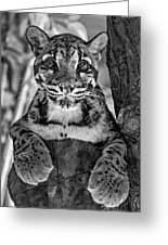Ms Paws Monochrome Greeting Card