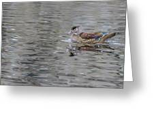 Ms. Wood Duck Greeting Card