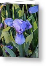 Msu Spring 10 Greeting Card