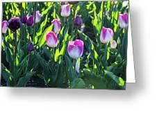 Msu Spring 3 Greeting Card