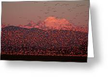 Mt Baker Snow Geese Greeting Card