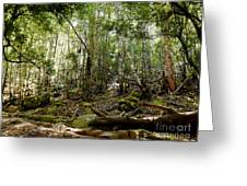 Mt Field Forest Greeting Card