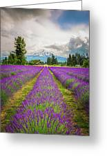 Mt. Hood And Lavender Greeting Card