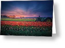 Mt. Hood And Tulip Field At Dawn Greeting Card