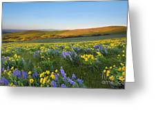 Mt. Hood Wildflower Morning Greeting Card