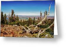 Mt. Howard, Wallowa Lake Greeting Card