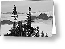 Mt Rainier National Park Greeting Card