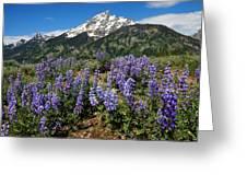Mt. Teewinot And Lupine Greeting Card