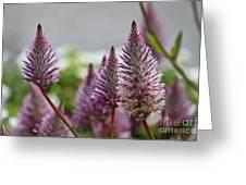 Mt. Washington Flowers Greeting Card