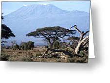 Mt.kilimanjaro Greeting Card