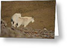 Mtn.goats Greeting Card