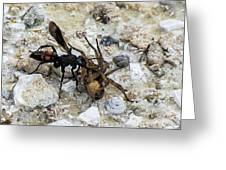 Mud Dauber Wasp And Prey Greeting Card